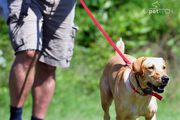 The Best Dog Training Collars that are very safe and reasonably priced